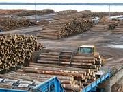 Продаётся действующий деревообрабатывающий комбинат